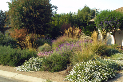 All Organic Fine Gardening and Garden Maintenance in California
