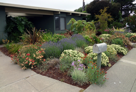 Low Water Garden Design Landscape Designer San Anselmo Dig Your