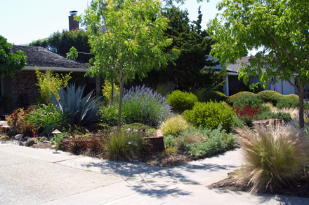 Lawn replacement drought tolerant landscape garden for Landscape design san jose